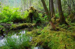 Lasowy staw Fotografia Royalty Free