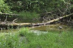 Lasowy staw Obrazy Royalty Free