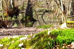 Lasowy staw Fotografia Stock
