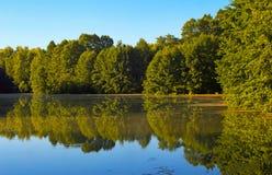 Lasowy staw w lecie w środkowym Rosja Obraz Royalty Free