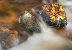 lasowy strumień Fotografia Stock