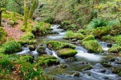 lasowy strumień zdjęcie stock