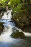 Lasowy Strumień zdjęcia royalty free