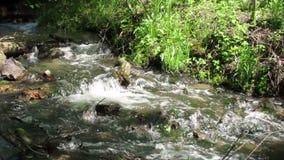 Lasowy strumień zdjęcie wideo
