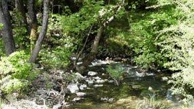 Lasowy strumień na krawędzi zbiory wideo