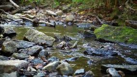 Lasowy strumień - Pokojowy strumyk zbiory wideo