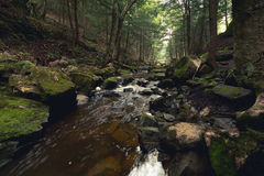 Lasowy strumień przy wschodem słońca Zdjęcia Stock