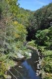 Lasowy strumień, Scranton, Pennsylwania fotografia stock