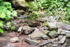 Lasowy strumień wśród drzew z małą siklawą, pięknymi kolorami i czystością wizerunek, Pokój i zaciszność Fotografia w wczesnym su obraz royalty free