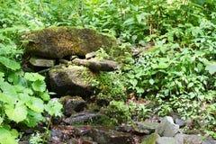 Lasowy strumień wśród drzew z małą siklawą, pięknymi kolorami i czystością wizerunek, Pokój i zaciszność Fotografia w wczesnym su obrazy stock
