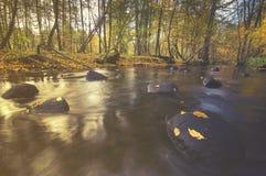 Lasowy strumień w jesieni, kolorowy zaszywanie, bieżącej wody falle Obraz Royalty Free