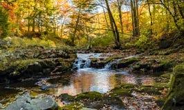 Lasowy strumień w spadku fotografia royalty free