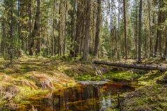Lasowy strumień w wiośnie Obraz Royalty Free
