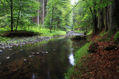 lasowy strumień Obrazy Royalty Free
