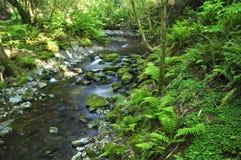 lasowy strumień Obraz Stock