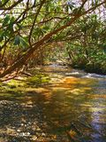 Lasowy strumień Obrazy Stock