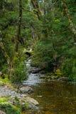 Lasowy strumień Zdjęcie Royalty Free
