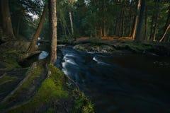Lasowy strumień przy zmierzchem Obrazy Stock