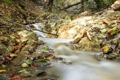 Lasowy strumień w jesieni Obrazy Royalty Free