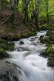 Lasowy strumień w Montenegro Zdjęcie Royalty Free