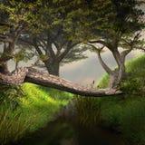 Lasowy strumyk ilustracja wektor