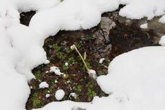 Lasowy strumyk Zdjęcie Royalty Free