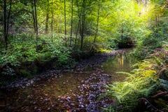 Lasowy strumyk Obrazy Stock