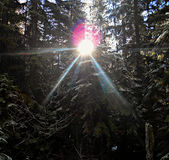 Lasowy Sunburst Obraz Stock
