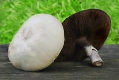 Lasowy szampinionu Agaricus silvaticus Zdjęcie Stock