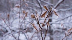 Lasowy szczegół zdjęcie wideo