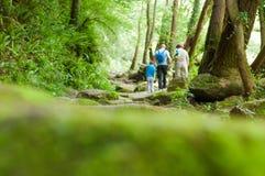 Lasowy tło z ludźmi Chodzi przez lasu z a, zdjęcie royalty free