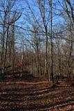 lasowy target2068_0_ ślad zdjęcie royalty free
