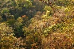 Lasowy teren w Mumbai ind obraz royalty free