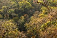 Lasowy teren w Mumbai ind zdjęcia stock