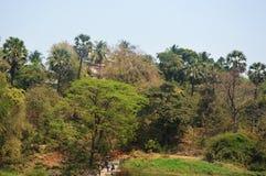 Lasowy teren w Mumbai ind zdjęcie stock