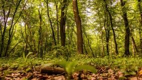 Lasowy Timelapse