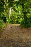 Lasowy Trai Obraz Stock