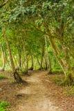 Lasowy Trai Obrazy Stock