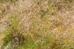 Lasowy trawy tło Fotografia Stock