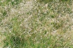 Lasowy trawy tło Zdjęcia Royalty Free