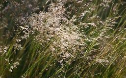 Lasowy trawy tło Fotografia Royalty Free