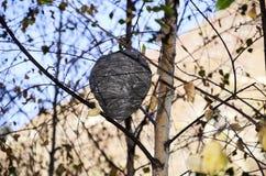 Lasowy ul na drzewie Zdjęcie Royalty Free