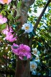 Lasowy wianek kwiaty obraz royalty free