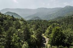 Lasowy widok Zdjęcia Royalty Free