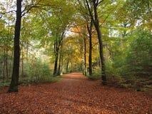 Lasowy widok Fotografia Stock
