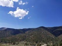 Lasowy widok Zdjęcia Stock