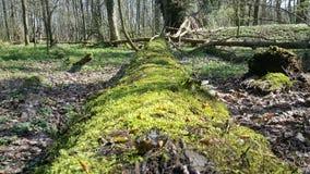 Lasowy widok Obrazy Royalty Free