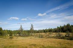 Lasowy widok nad meer Obrazy Stock