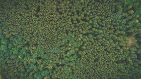 Lasowy widok od wierzchołka w górę fotografia stock