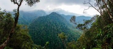 Lasowy widok w PANACAM parku narodowym w Honduras zdjęcia royalty free